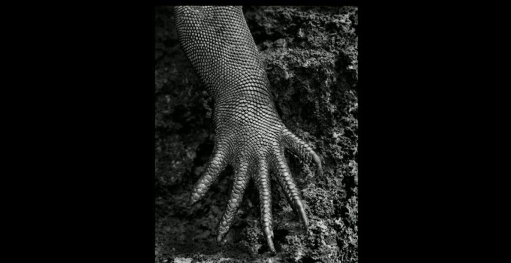 Zemes druska galapagai
