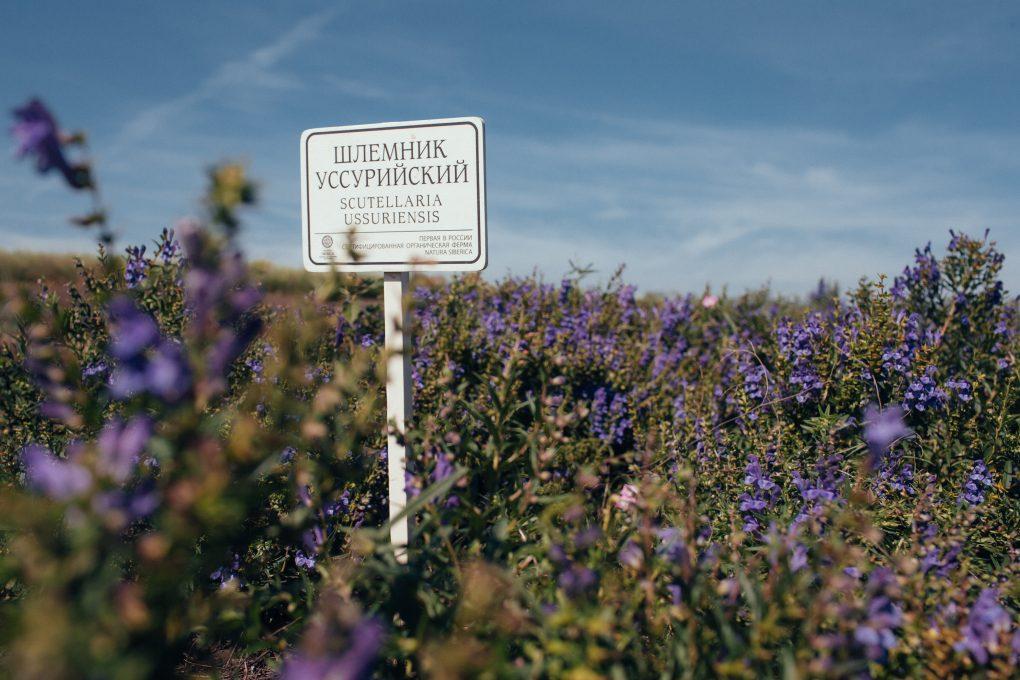 Natura siberica ekologinis ukis